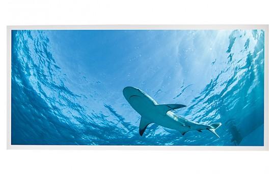 LED Skylight w/ Lone Shark Skylens® - 2x4 - Dimmable - Drop Ceiling - EGD2-W3-x24