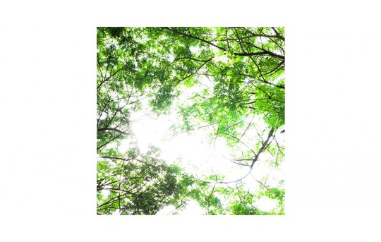 Skylens® Fluorescent Light Diffuser - Forest Boughs Decorative Light Cover - 2' x 2' - TRD-T1-22