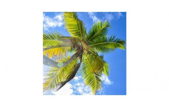 Skylens® Fluorescent Light Diffuser - Palm Trees Decorative Light Cover - 2' x 2' - TRD-T2-22