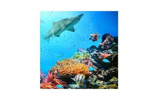 Skylens® Fluorescent Light Diffuser - Ocean Life Decorative Light Cover - 2' x 2' - TRD-W1-22