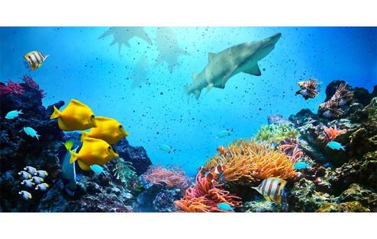 Skylens® Fluorescent Light Diffuser - Ocean Life Decorative Light Cover - 2' x 4' - TRD-W1-24