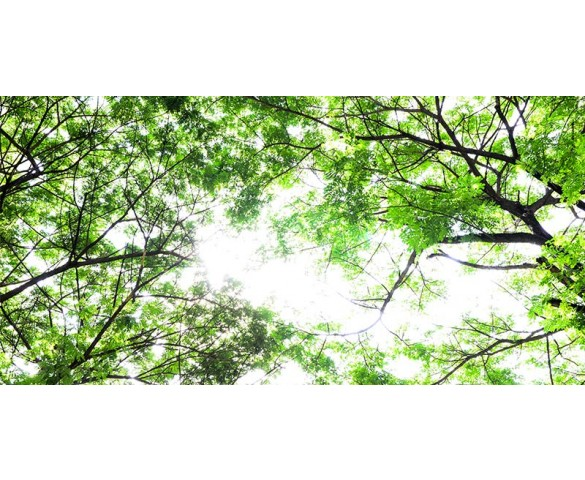 Skylens® Fluorescent Light Diffuser - Forest Boughs Decorative Light Cover - 2' x 4'