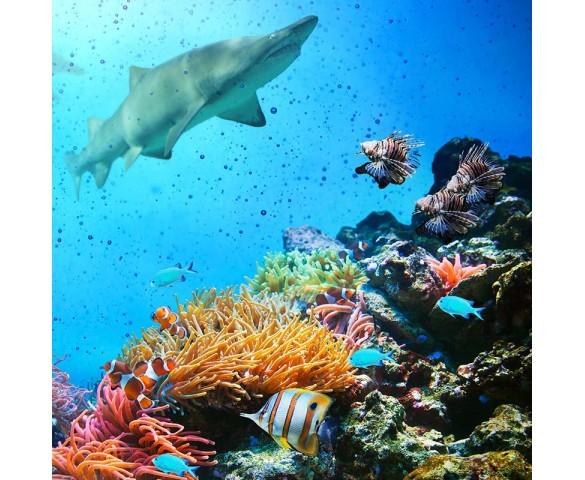 Skylens® Fluorescent Light Diffuser - Ocean Life Decorative Light Cover - 2' x 2'
